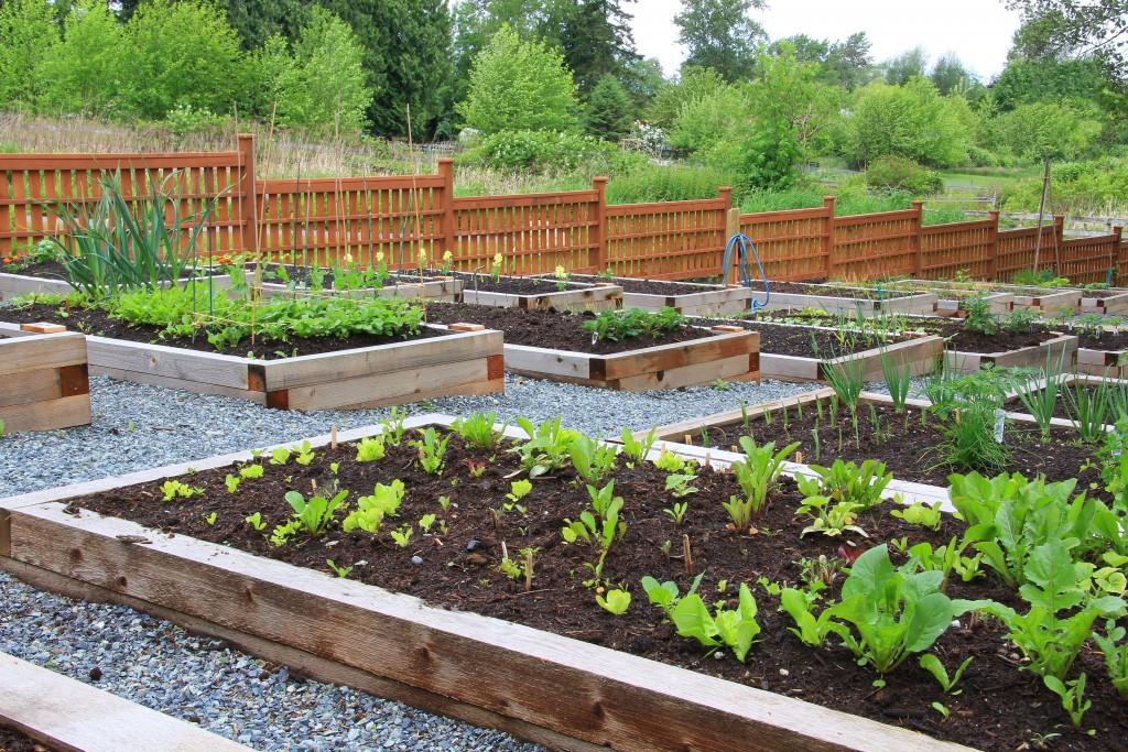 vegetable garden boxes